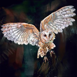 Night Flight by Debbie Boon - Limited Edition on Canvas sized 20x20 inches. Available from Whitewall Galleries